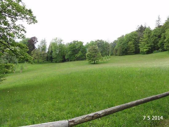 Kaiser-Villa: The sparse park