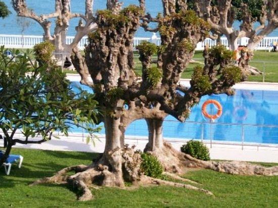 Parador de Nerja: Piscina y jardin