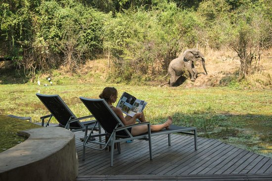 South Luangwa National Park, Sambia: Regular guest at Nkwali