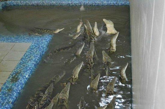 Krokodilvil
