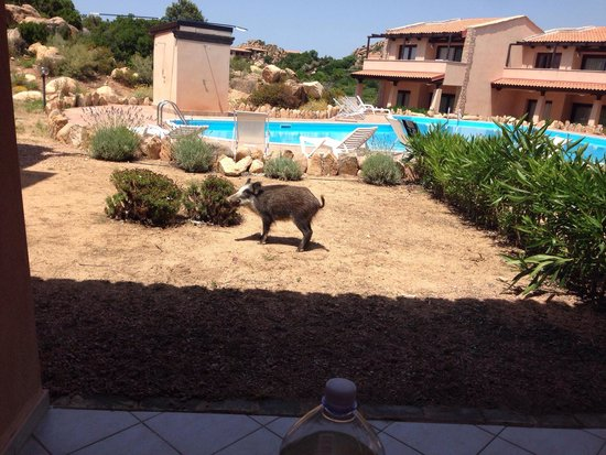 Resort Gravina - Costa Paradiso: Dalla nostra veranda!!