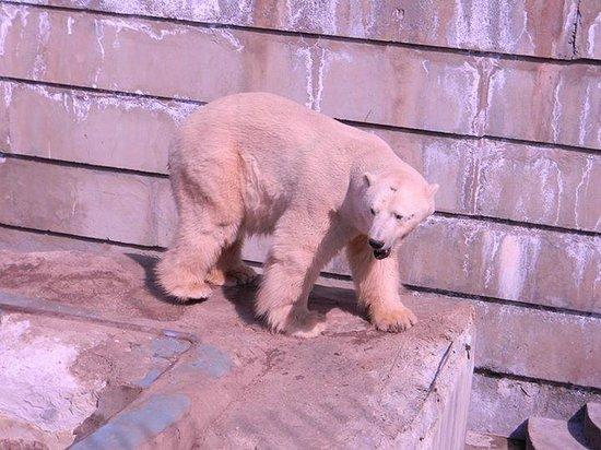 Yekaterinburg Zoo
