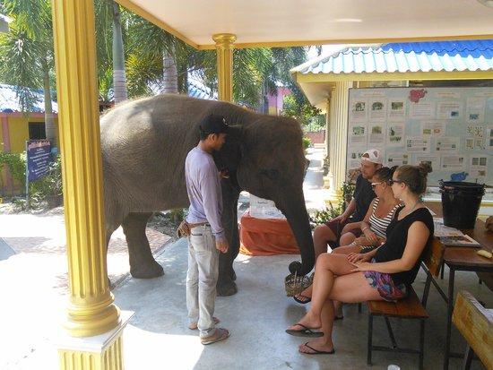 Hutsadin Elephant Foundation: Baby