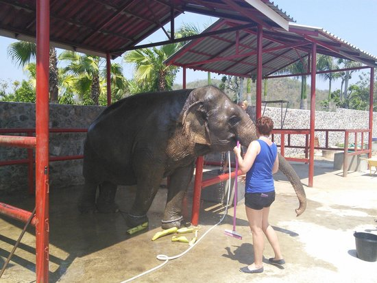 Hutsadin Elephant Foundation: Having a wash