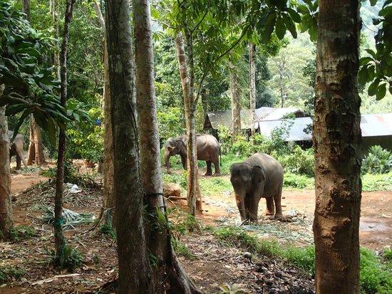 Ban Kwan Chang: le camp dans une vegetation luxuriante