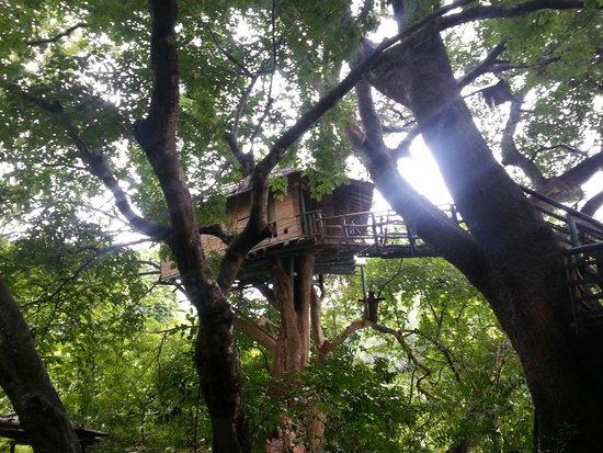 Hornbill River Resort: A tree House