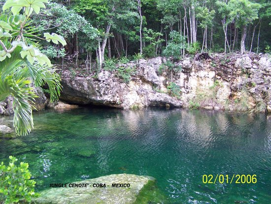Ruines de Cobá : Jungle Cenote