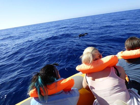 Azoren Walbeobachtung Terra Azul: Common Dolphins alongside the boat