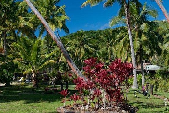 Papageno Resort : Tropical Garden setting