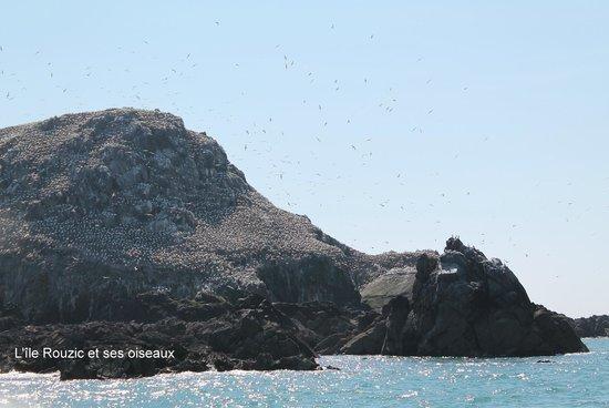 Reserve Naturelle des Sept Iles: L'île Rouzic