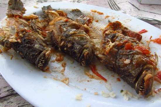 Islets of Granada: They call them Ugly Fish