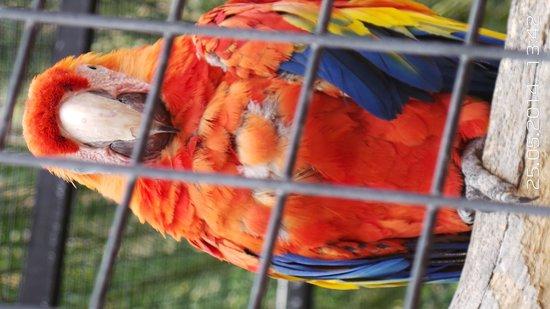 palmitos park 1