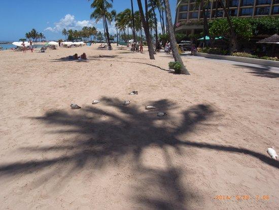 Waikiki Beach: やしの木がパラソル