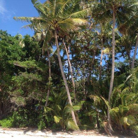 Four Mile Beach : La cueillette des noix de coco