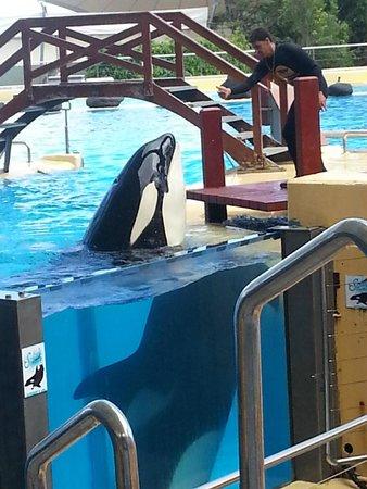 Loro Parque: Orca whale