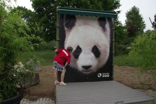 Toronto Zoo: Lindos Pandas no Zoo