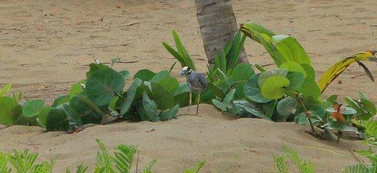 Sivory Punta Cana Boutique Hotel: Bird on beach