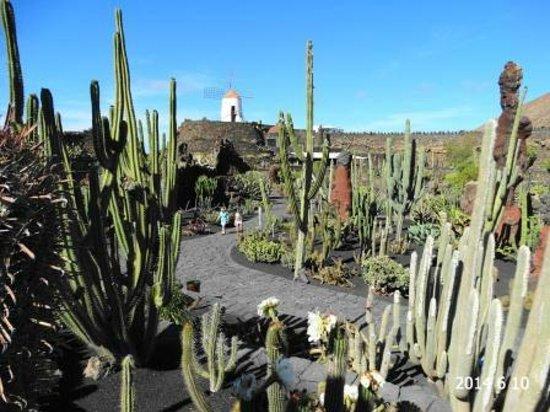 Apartamentos THe Morromar : Ogród Kaktusów