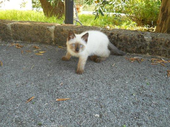 Parco dei Limoni: la simpaticissima gattina Clio