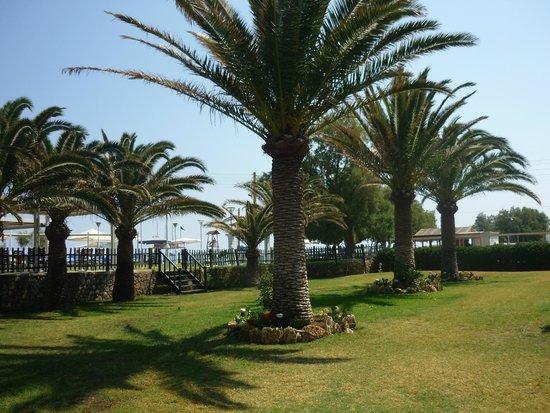 Minos Mare Hotel : tuin