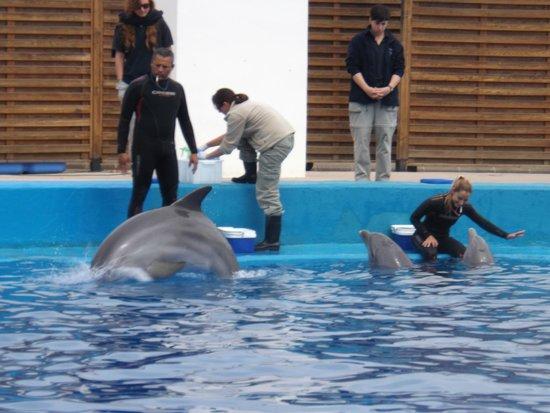 Ciudad de las Artes y las Ciencias: delfinario