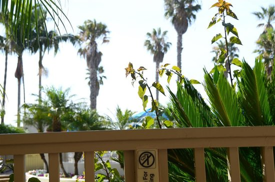 Harbor View Inn : View from sunbed 1 of terrace