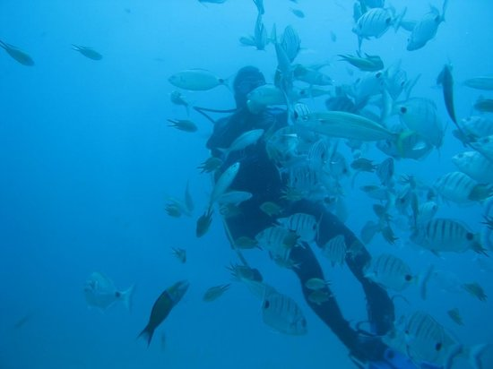 Submarine Safaris Lanzarote: A diver in the midst of tropical fishes