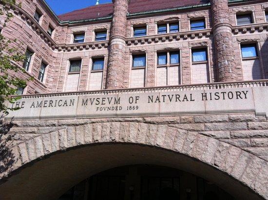 American Museum of Natural History: riproduzione zanzara