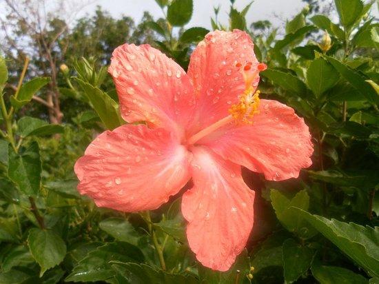 Jardin Botanique de Deshaies : Flower