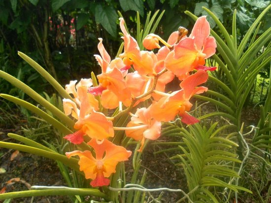 Jardin Botanique de Deshaies: Flowers
