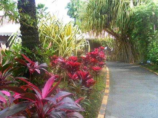 Jardin Botanique de Deshaies : Jardin Botanique