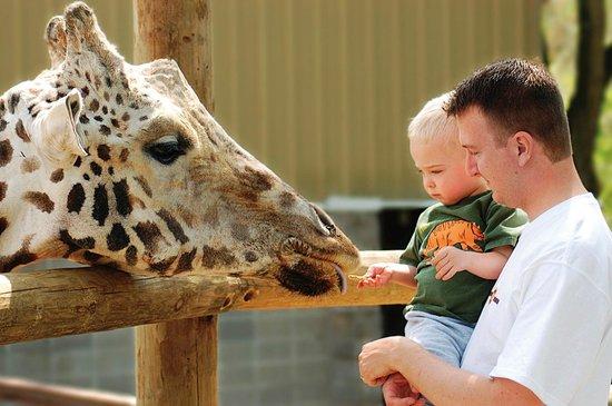 Springfield, MO: Dickerson Park Zoo