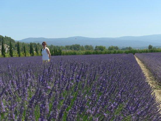 Le Mas de l'ile : Provence lavender field!!