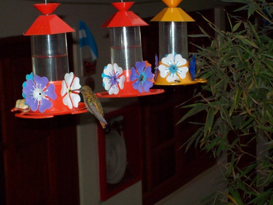 Hotel Jardín de Iguazú: El patio se llena de colibries que viene a estos bebederos