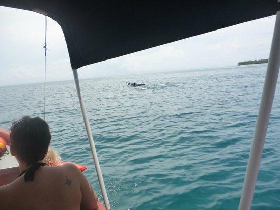 Dolphin Bay Preserve : aquella mancha en el mar ... Un Delfin !!!!!! al fin jjaja !!!