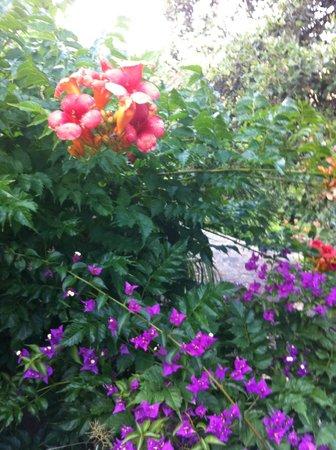 Hotel Paradis : Garden