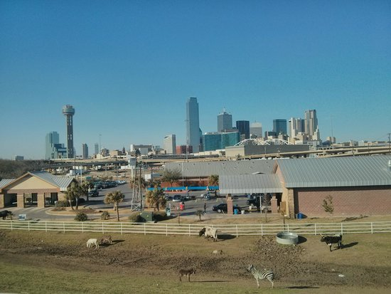 dallas skyline from trinity greenway behind fuel city picture of