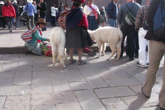 Plaza de Armas (Huacaypata): Mulheres e lhamas prontas para fotos com turistas