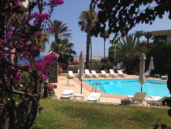 Casas Carmen : swimming pool and beautiful garden