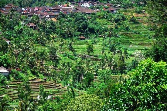 Jatiluwih Green Land : 世界遺産ジャティルイの棚田遠望
