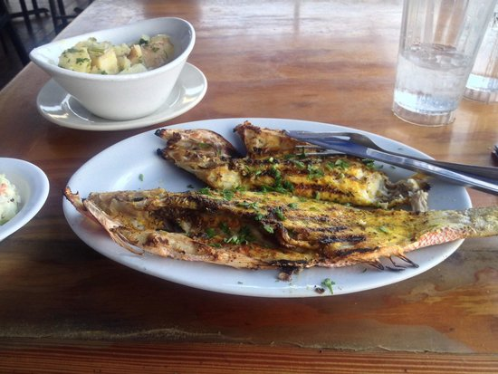 Garcia Seafood Grille : Yellowtail grilled