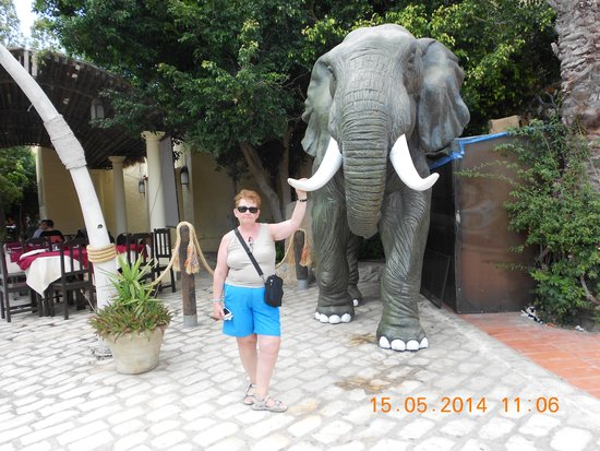 Yasmin Hammamet : éléphant à yasmine