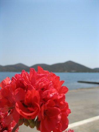 Kafenio Paparouna - Poppy's: View from the Kafenio Paparouna