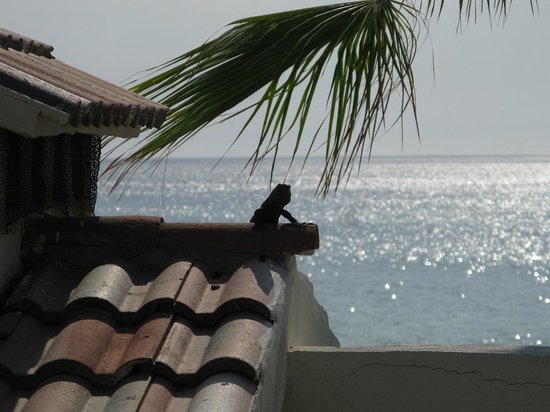 "Punta Pescadero Paradise Hotel & Villas: What's his name?  ""We call him Iguana"""