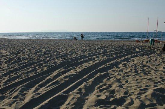 Venus Mare Apartments : Παραλία