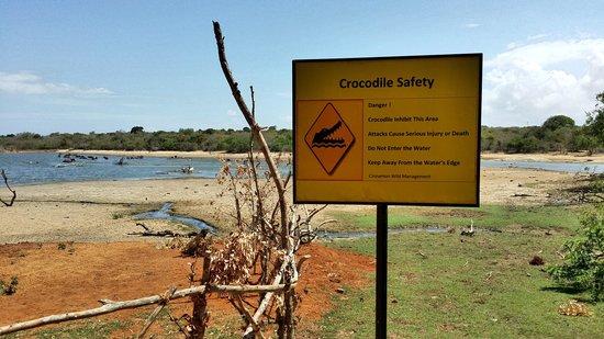 Cinnamon Wild Yala : Beware of Crocodiles