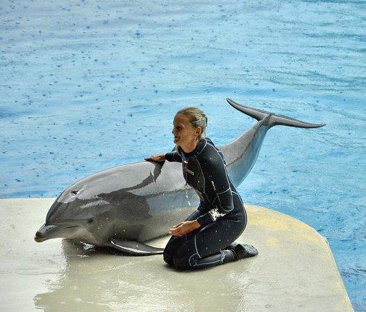 Oltremare : Delfino + Istruttrice