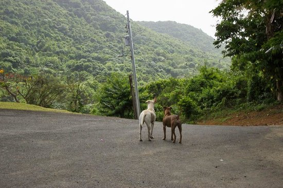 Ceiba Country Inn: Casper and Leona watch for guests