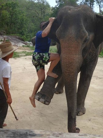 All in 1 Guesthouse: Excursion elephant