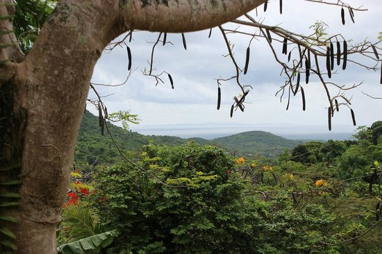 Ceiba Country Inn: The view that never grows old